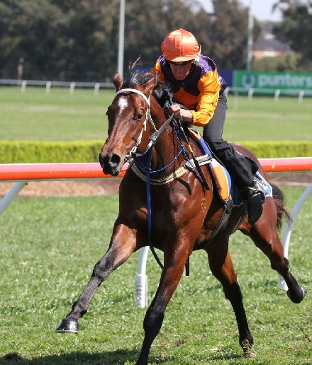 TOP-PRICED WRITTEN TYCOON TRIALS AT CANTERBURY