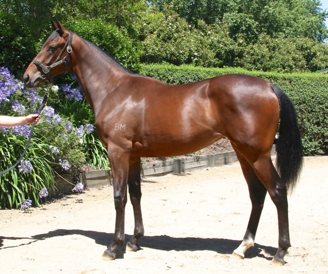 RBA BOUGHT THIS SNITZEL FILLY FOR $210,000