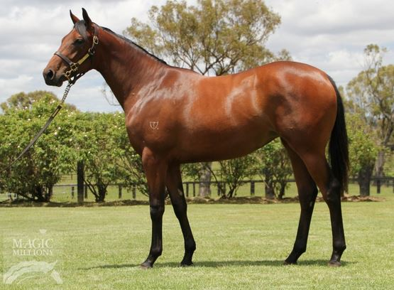ROYAL DISGUISE PICTURED AS A YEARLING PRIOR TO THE MAGIC MILLIONS