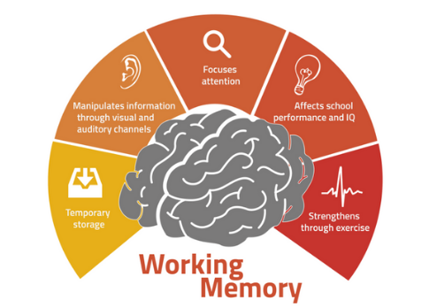 Working memory image.png