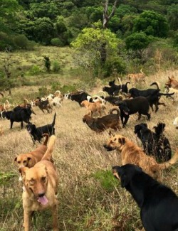 Dogs in Costa Rica