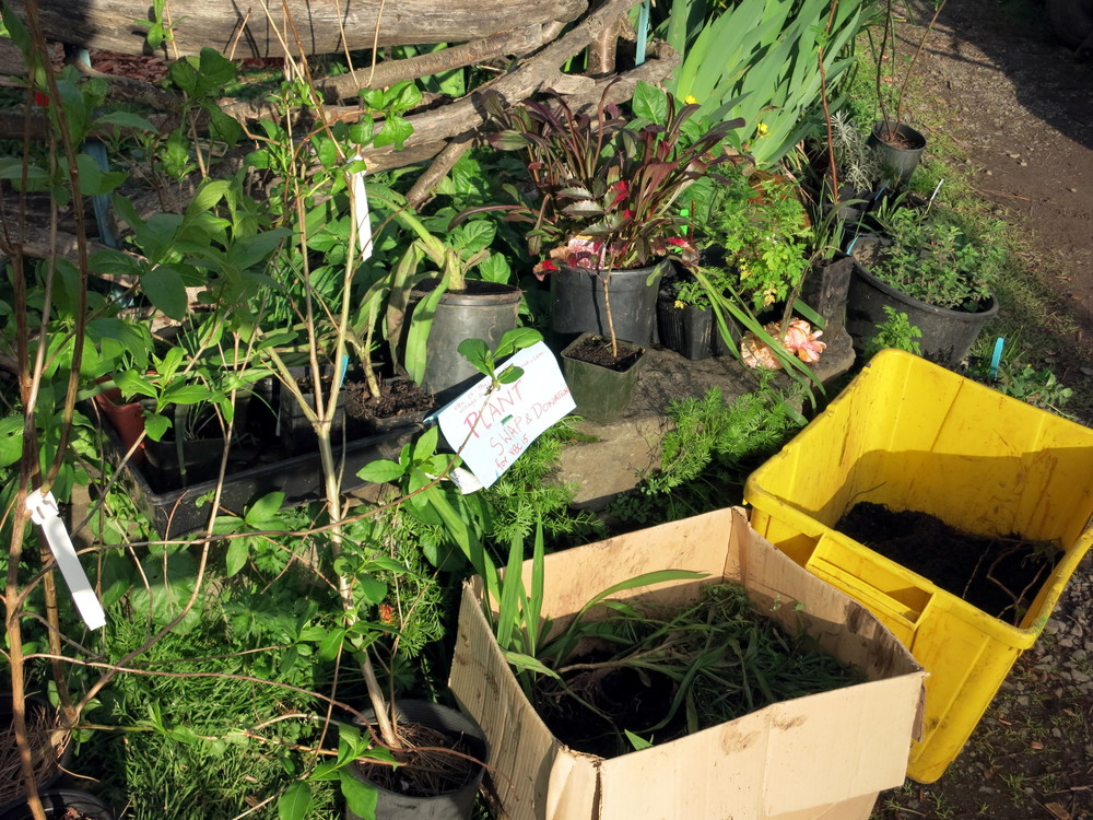 plant swap 1.JPG