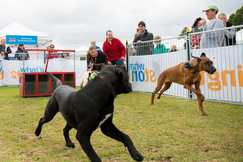 Pets in the Park 2015