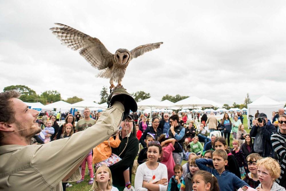 Owl Event