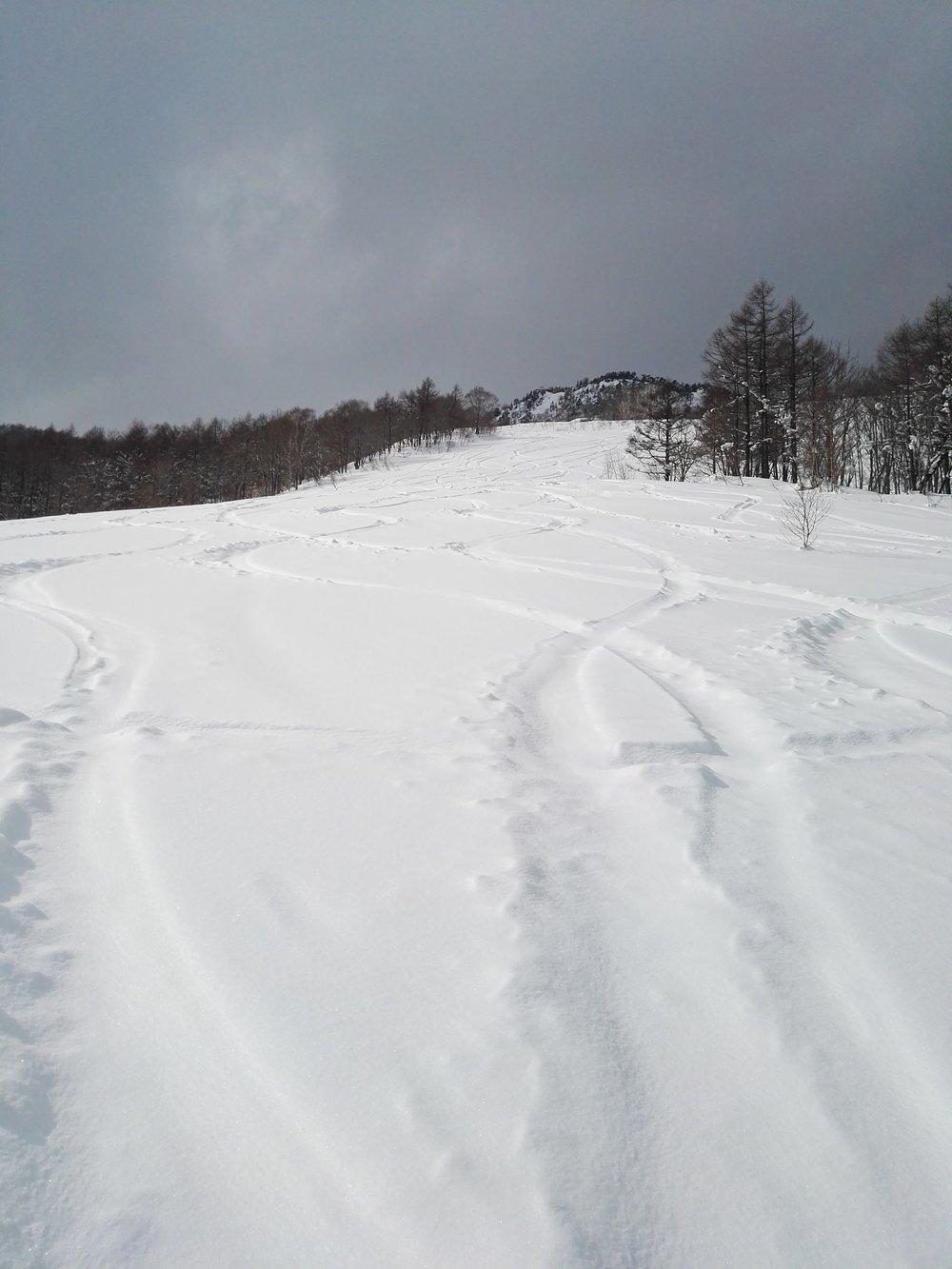 Cat Ski Run.jpg