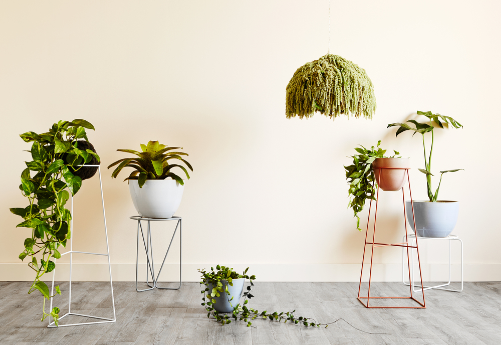 Images by  Annette O'Brien       We are so pleased to welcome Ivy Muse to Forage! These beautiful plant stands are the perfect way to bring the green indoors. They combine minimal simplicity in a way that makes these plant stands the perfect addition to any space.