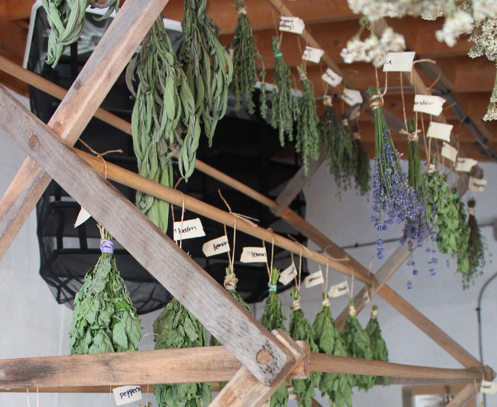 herb rack716.jpg