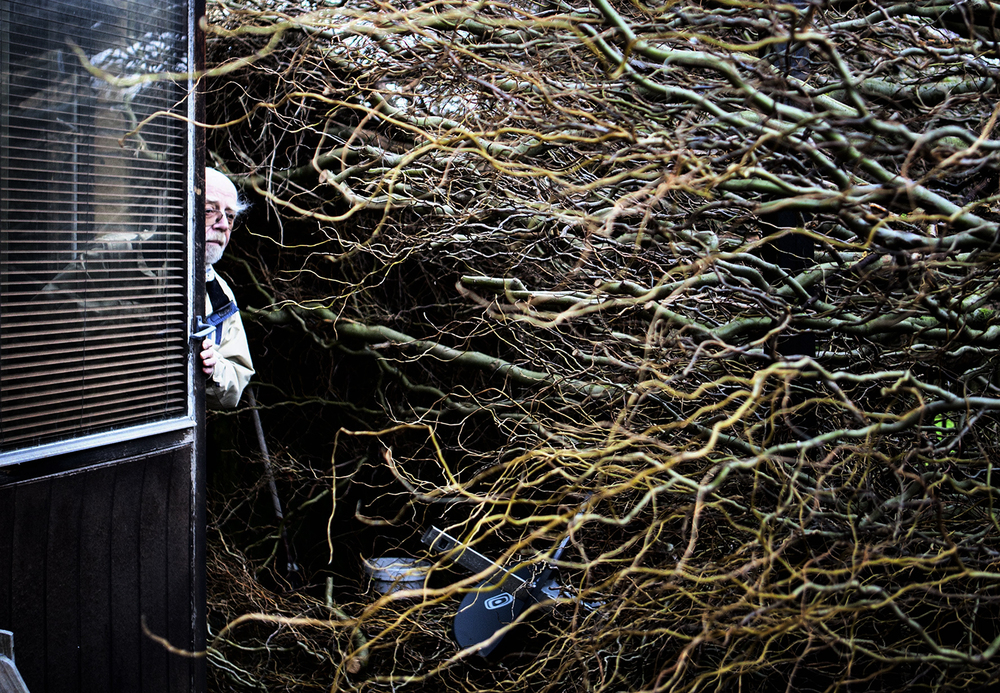 Fallen tree, Malmö