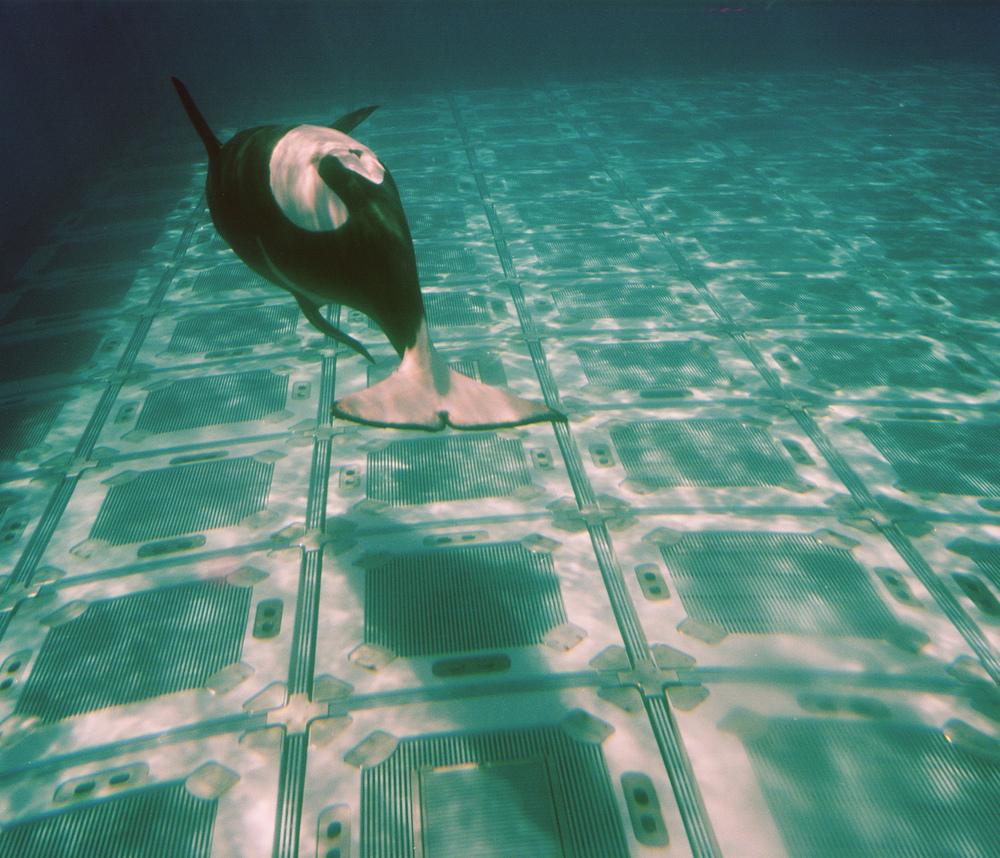 SeaWorld02.jpg