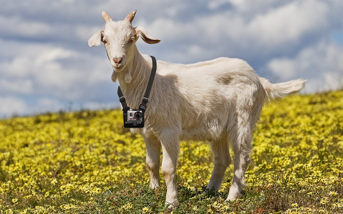 GoPro Goat - coming to a Bromford community soon