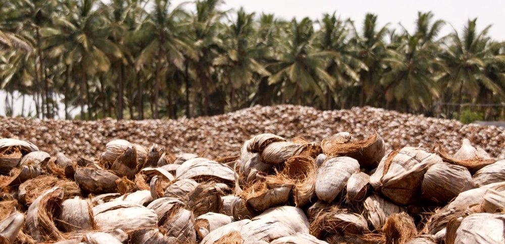 Afval van kokosnoten is de grondstof voor Dutch Plantin in Coimbatore (foto: Dutch Plantin)