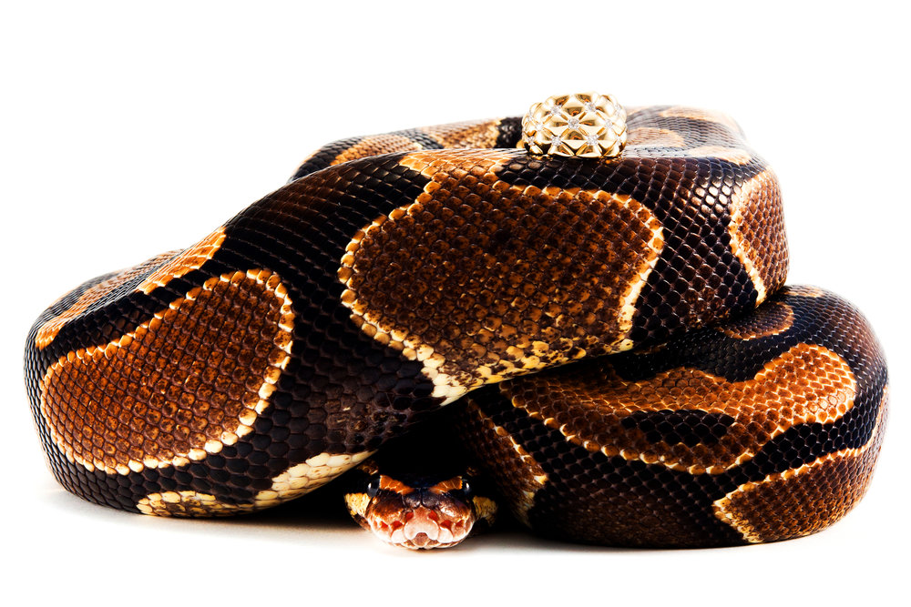 Snakes -005.jpg