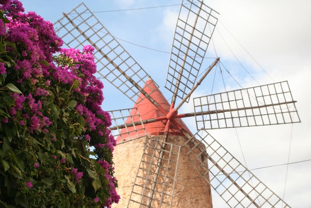 Väderkvarnarna är typiska för Mallorca.