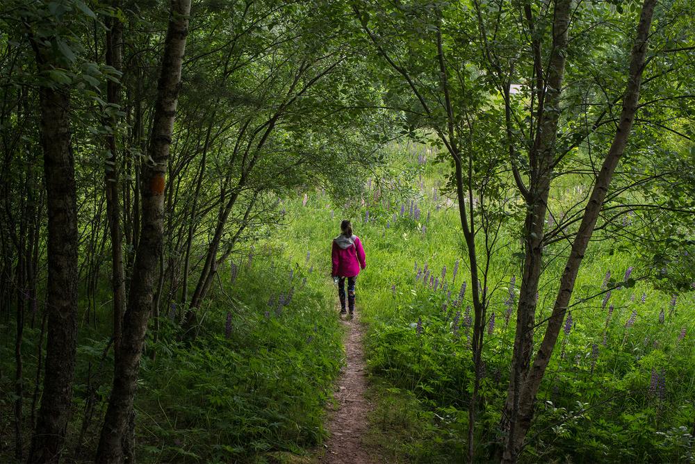 Svensk djungel. Photo by Laura Drosse