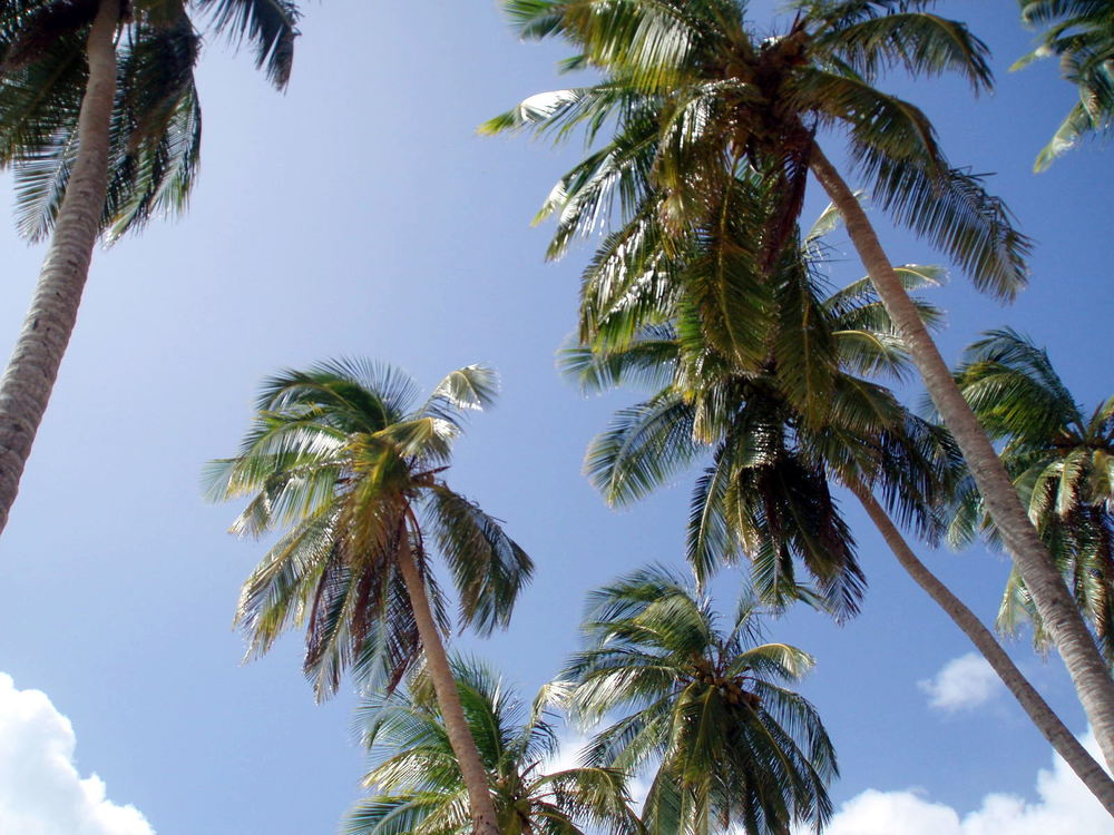 sanna_rosell_colombia_palms.JPG