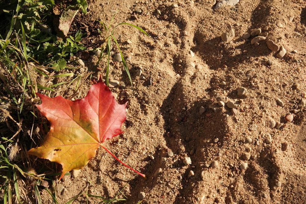 autumn_sannarosell