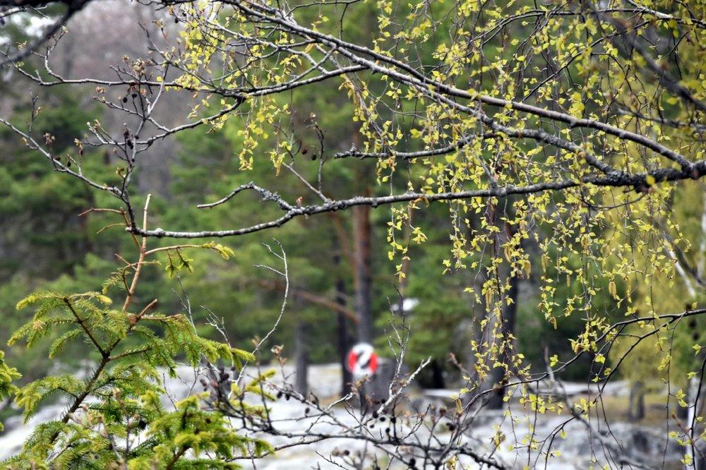 Ängsö naturreservat utanför Västerås går att åka till både land- och sjövägen.