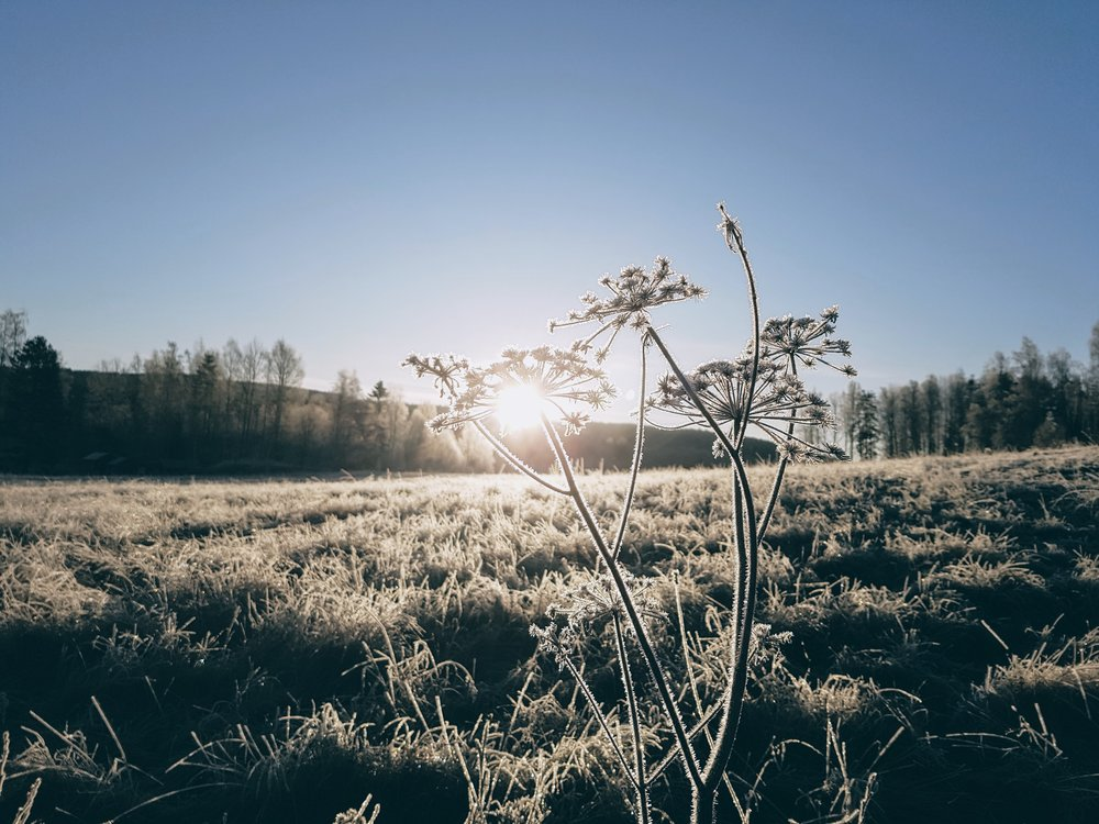 Vinter i Värmland.