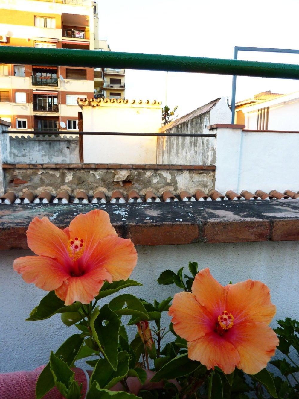 Vår terrass på taket där vi pluggade (och solade)