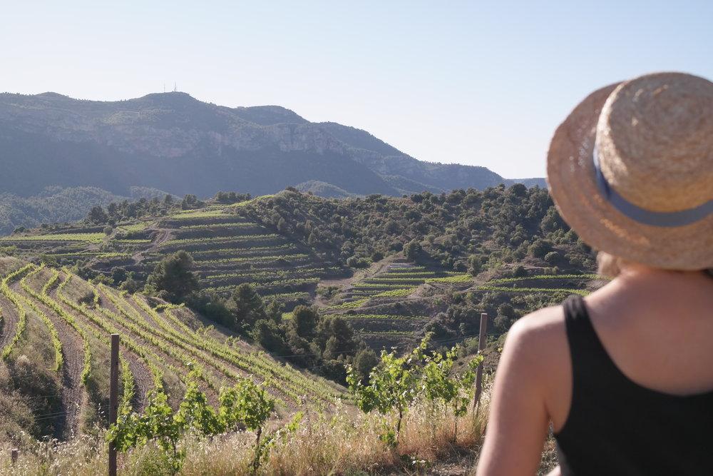 En annan mat- och vinresa, i ett annat land. Då cava i Barcelona, nu ost och rödvin i Molise.