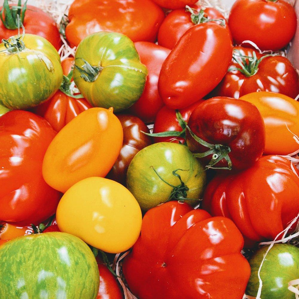 Tomater i alla färger och former som finns