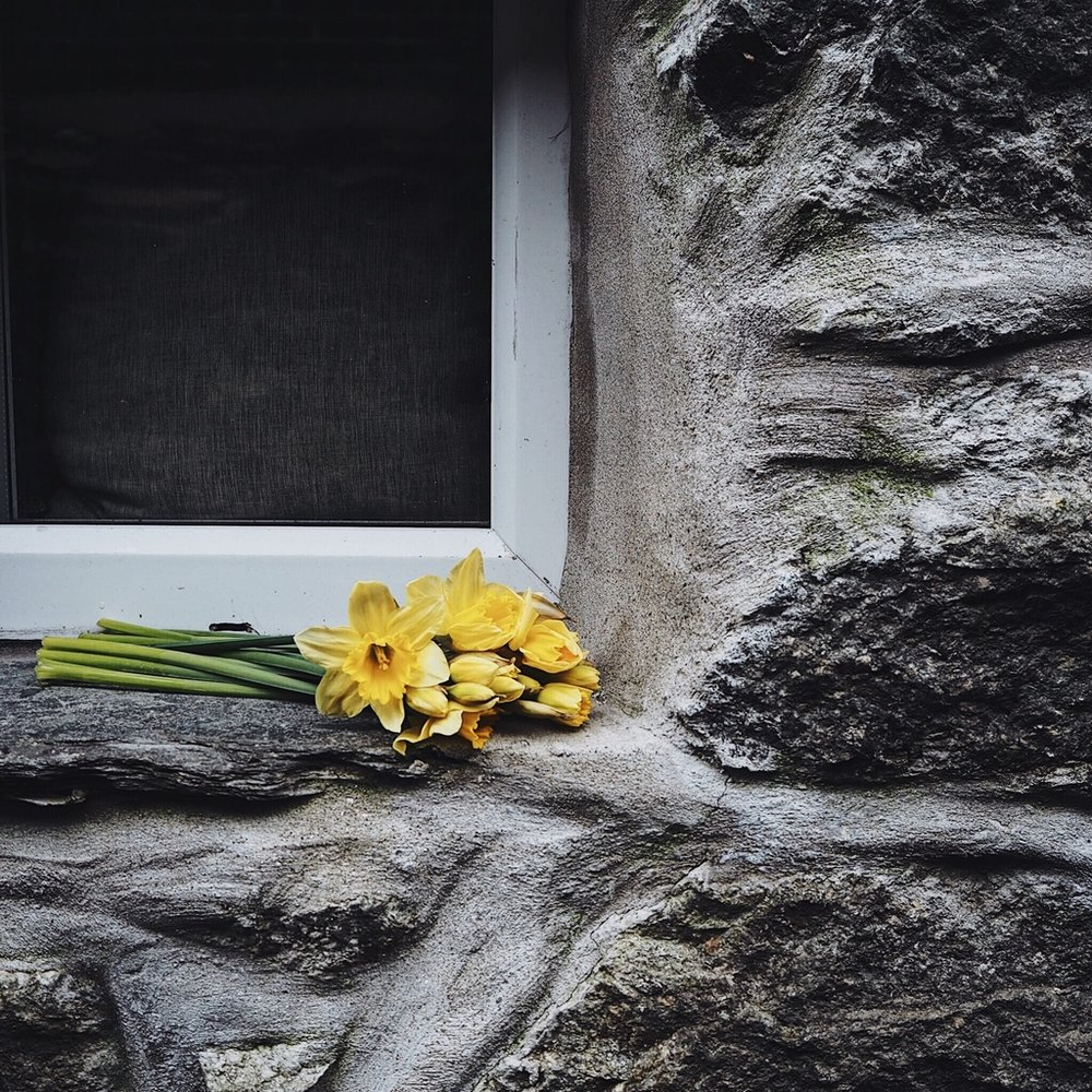 Daffodils on a cottage windowsill.jpg