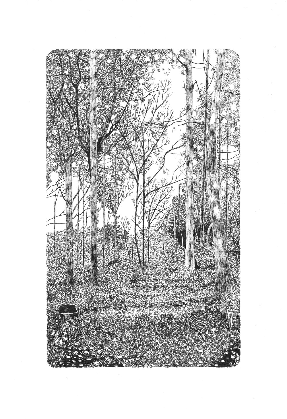 Claire+Leach+-+Woodland+Study+IV.jpg