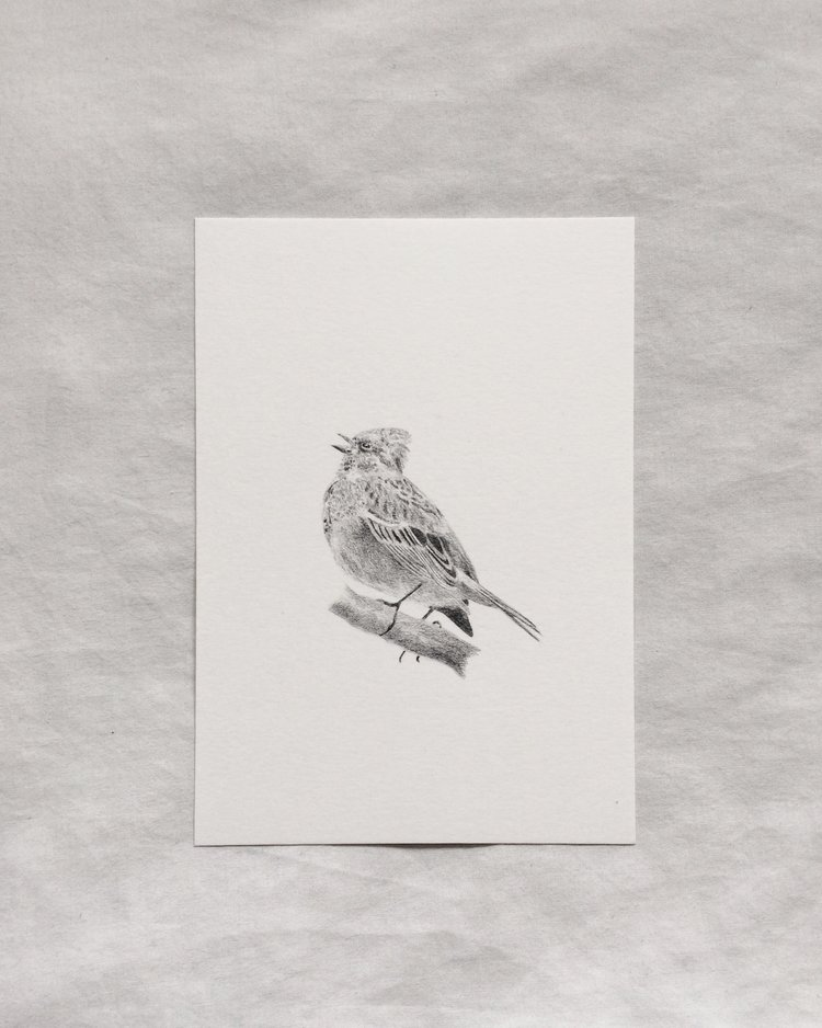 Claire Leach - Chirping Bird.jpeg