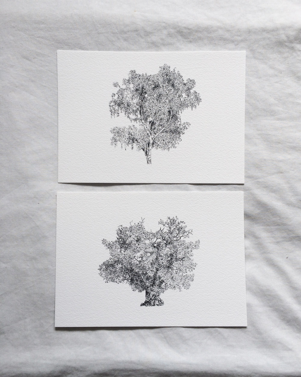 Claire Leach - Tree Commission.jpg