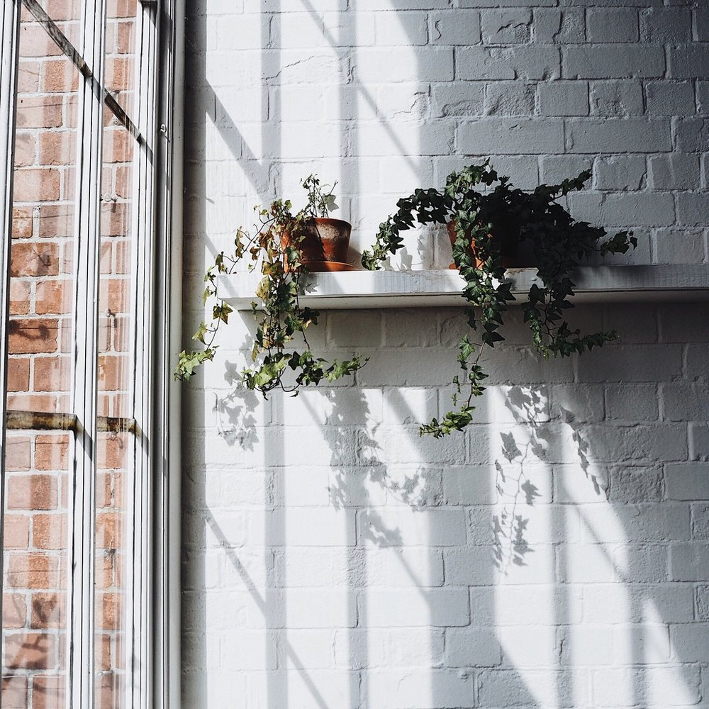 Plants on a shelf on a white brick wall.jpg