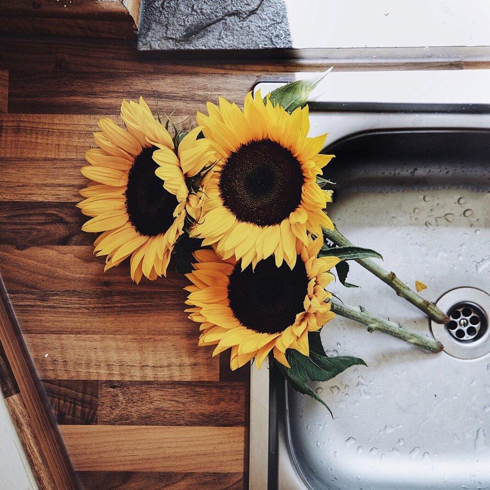 Three sunflowers in a metal sink.jpg