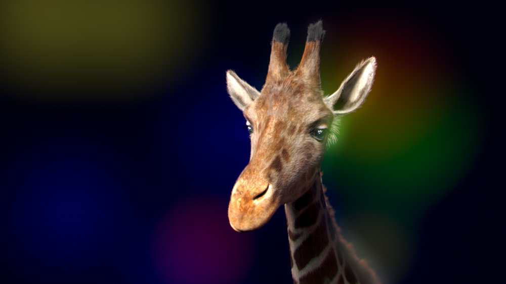 An animation of a 3d giraffe, some b-roll, and some motion graphics! Its Zoo Lights!
