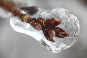 ice-buds-bryan-davies.jpg