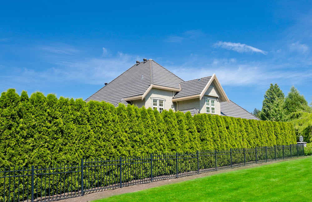 Trees can make great privacy screens without the harshness of a traditional fence.