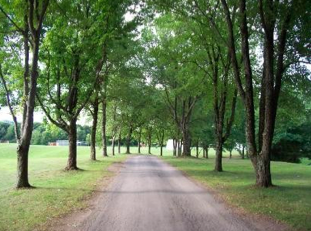 1. Walk the tree-lined path to the dining room