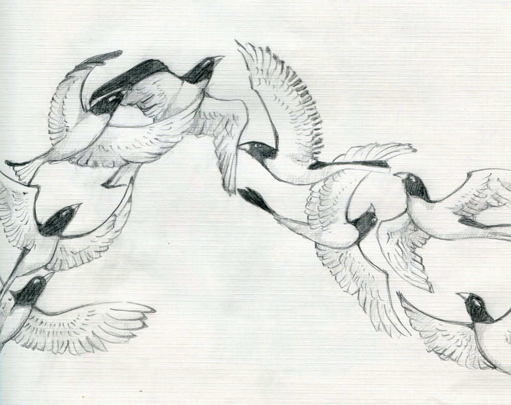 birds_o.jpg