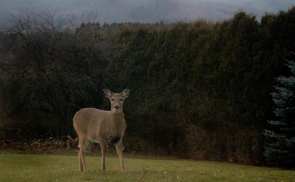 Oh Deer!! ISO 6400 f 5.6 1/50