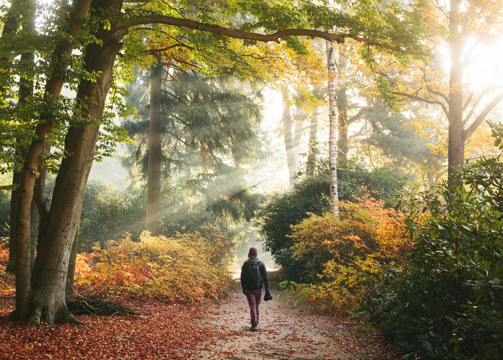 Konsta Linkola - Autumn wanderer
