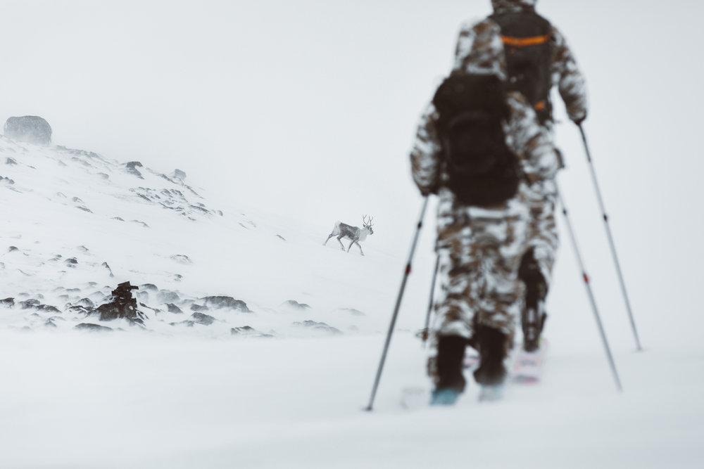 Peak Performance reindeer