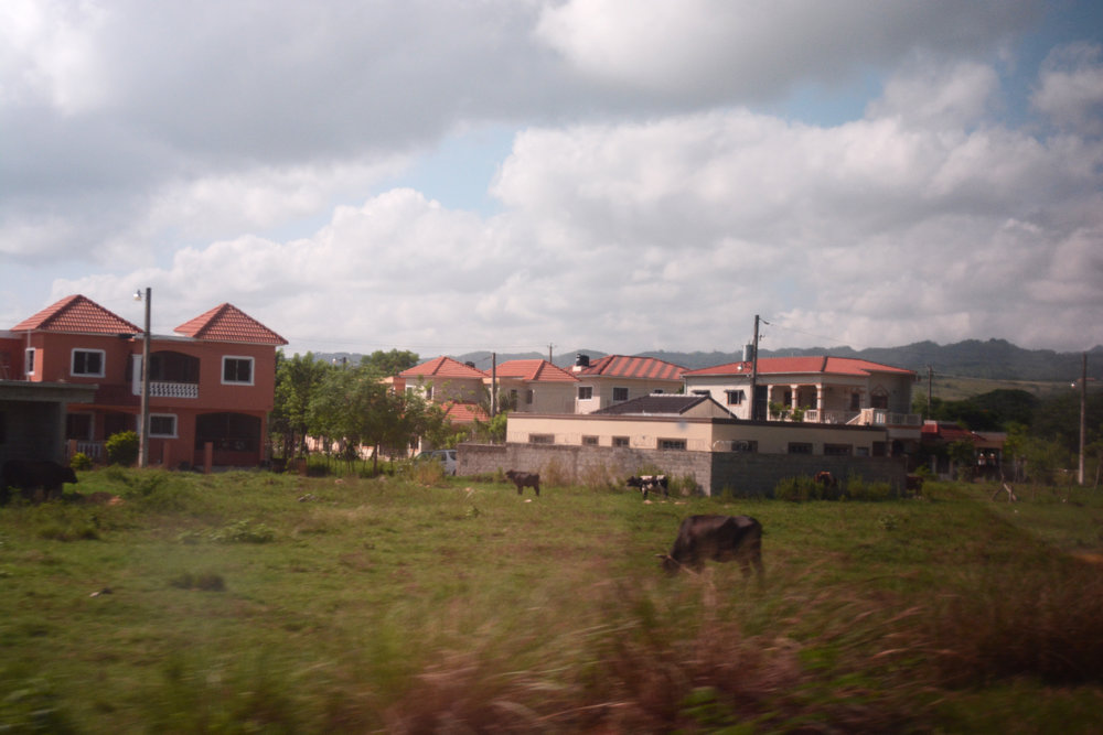 Dominican Drive By: Cow, 2016