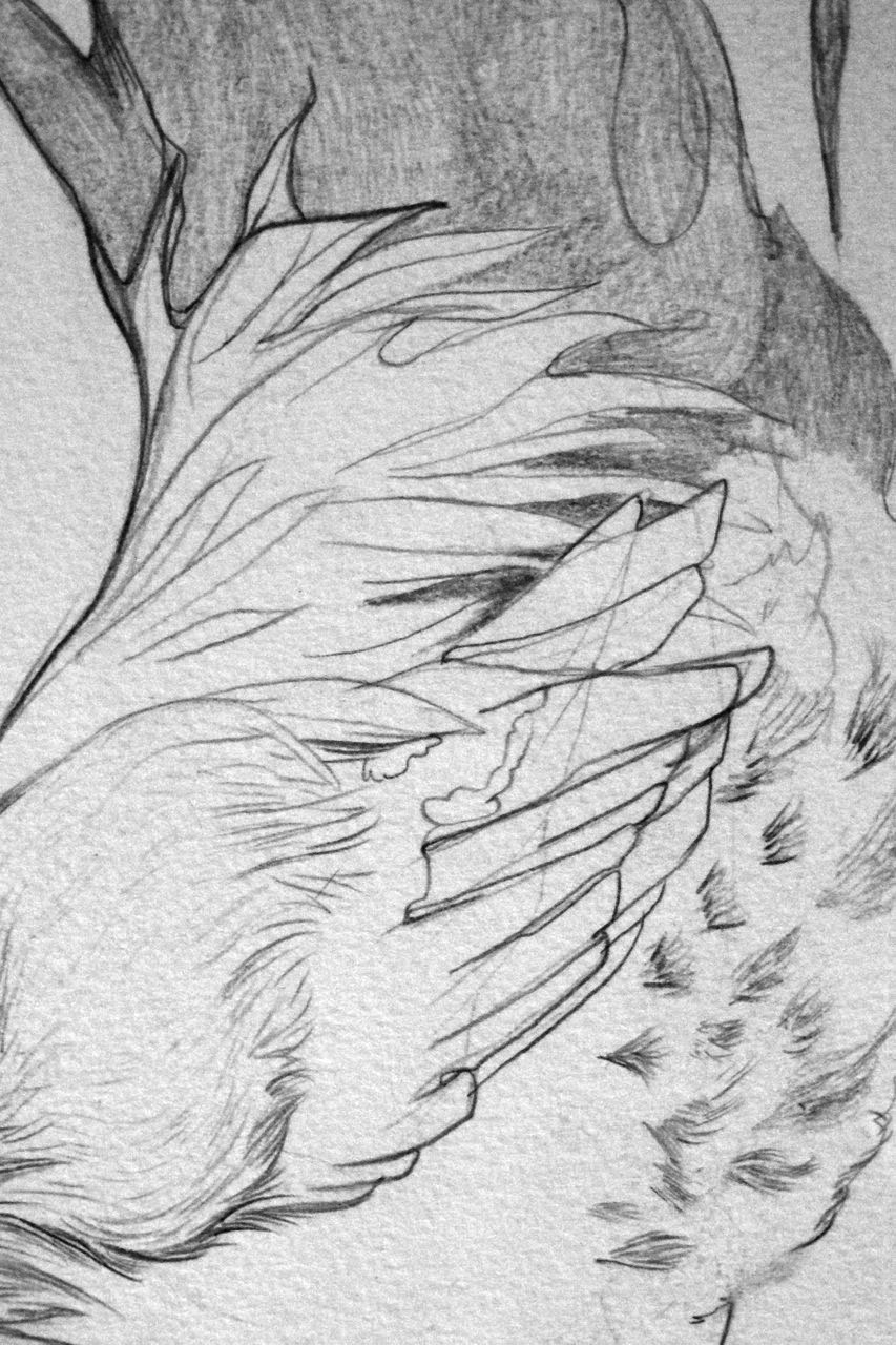 (detail) The Roosters