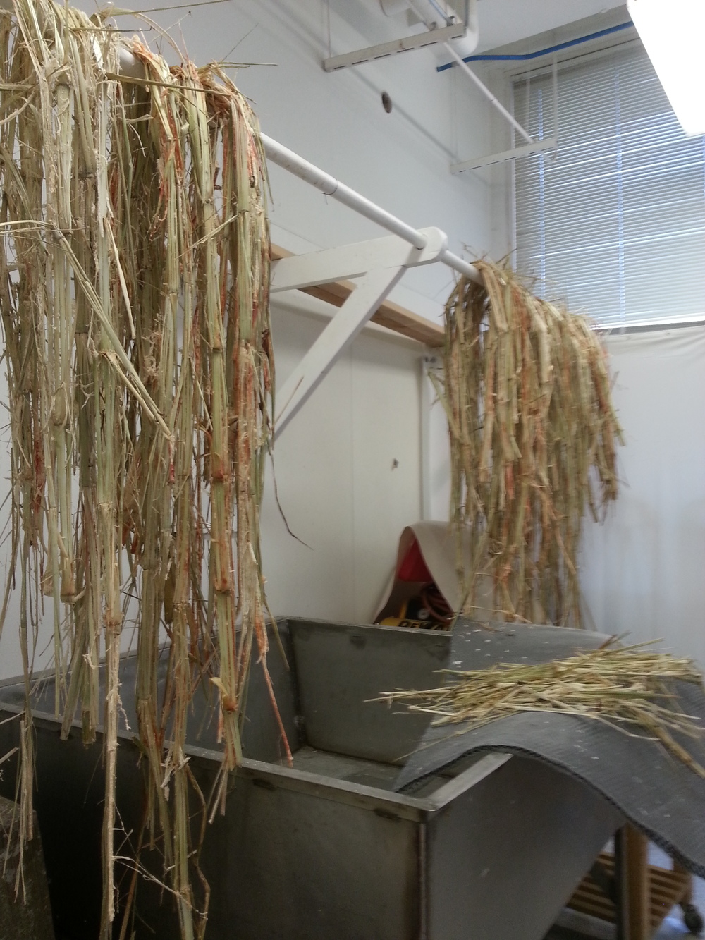 In the fall the crop was harvested by students, and prepped for pressing by stripping it of all its leaves. Once prepped it was loaded and transported to an annual sorghum festival in Fall River, Wisconsin.  ...
