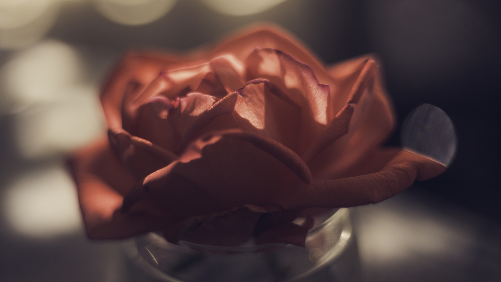 Rose | Shot on lensbender