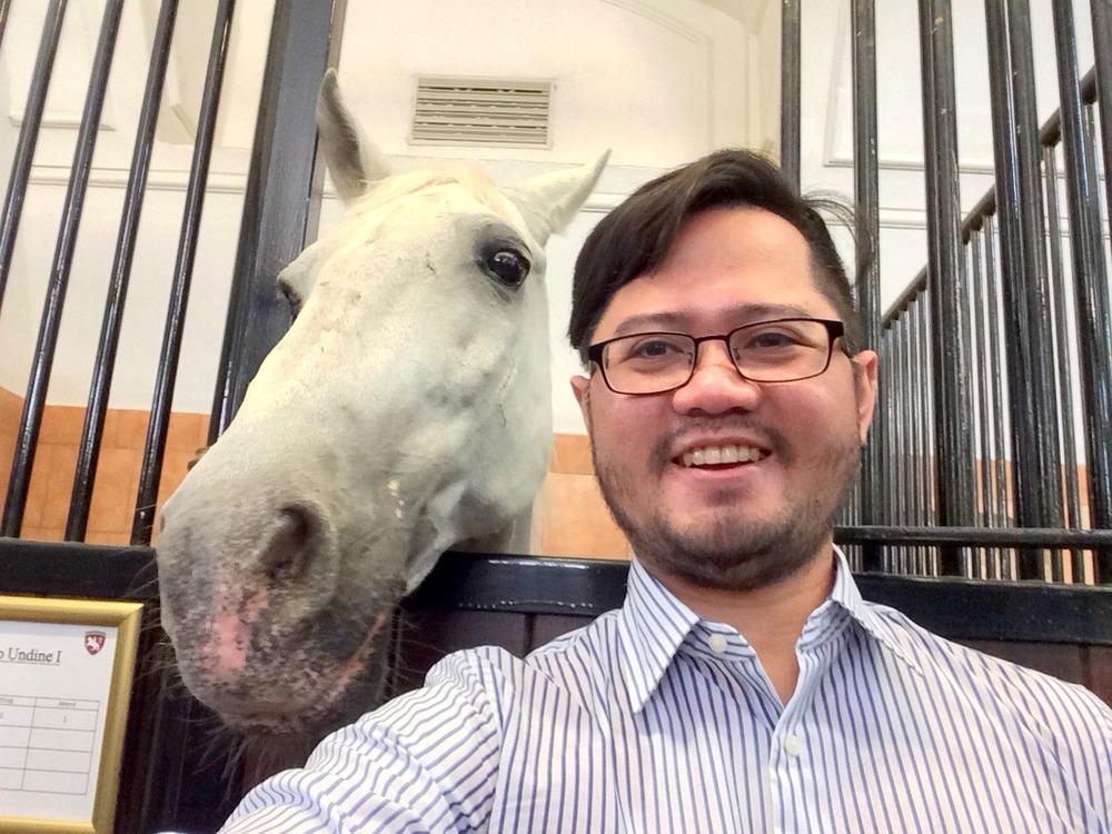 A Lipizzaner selfie.