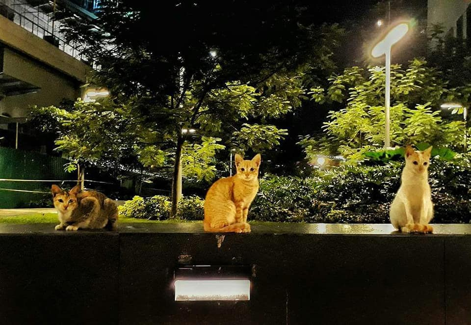 Cats of BGC. They are still missing.