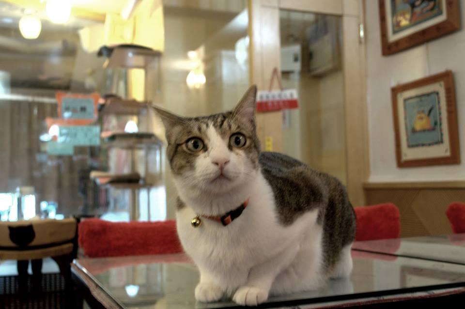 Taipeicat3.jpg