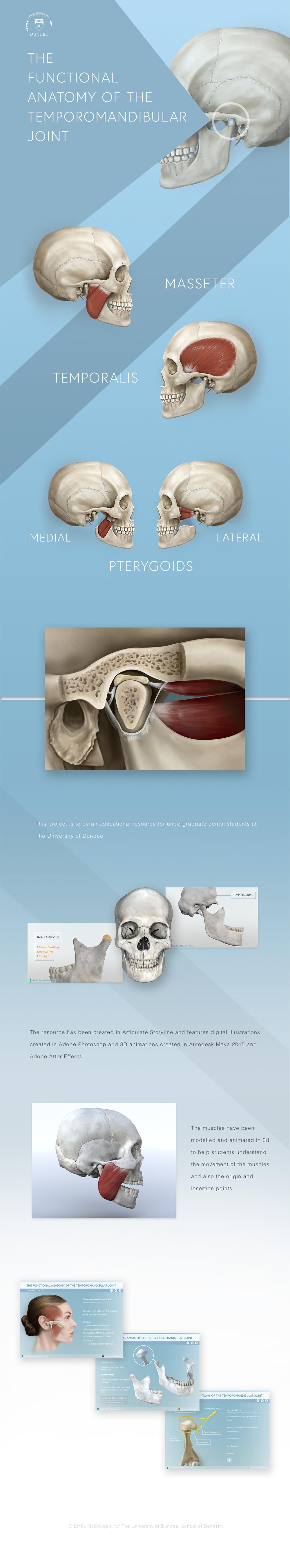 Functional_Anatomy_TMJ_Behance2.jpg