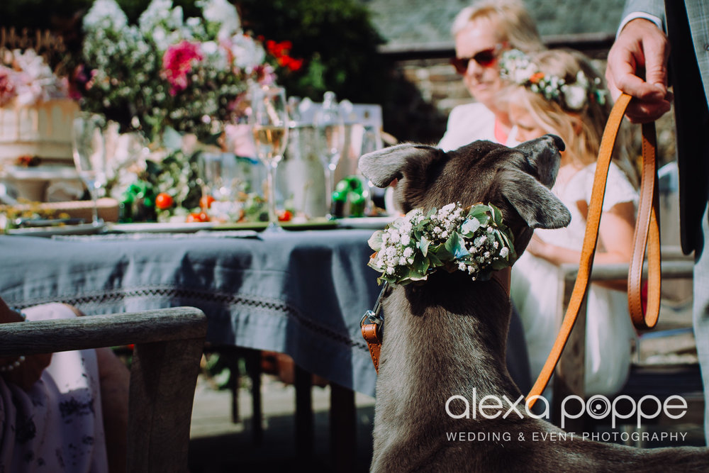 ask your florist to add a flower piece for your dog's collar..