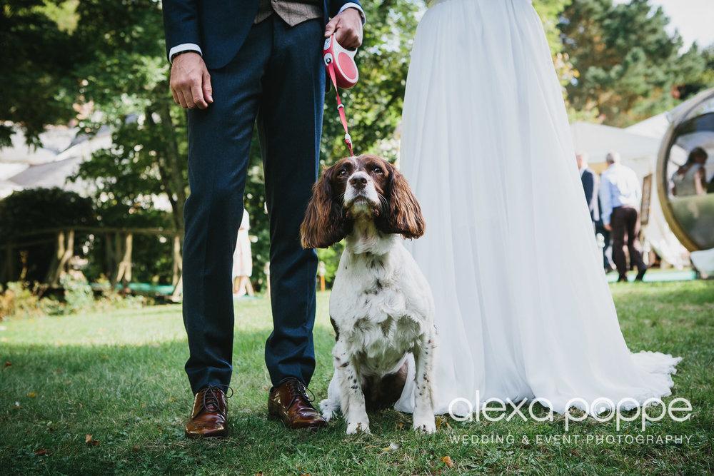 GP_wedding_roseinvale_weddingdog_2.jpg