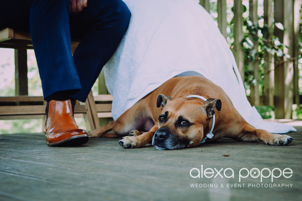 doesn't he look pleased to take part at his owner's ceremony at The Green Cornwall Wedding & Events?